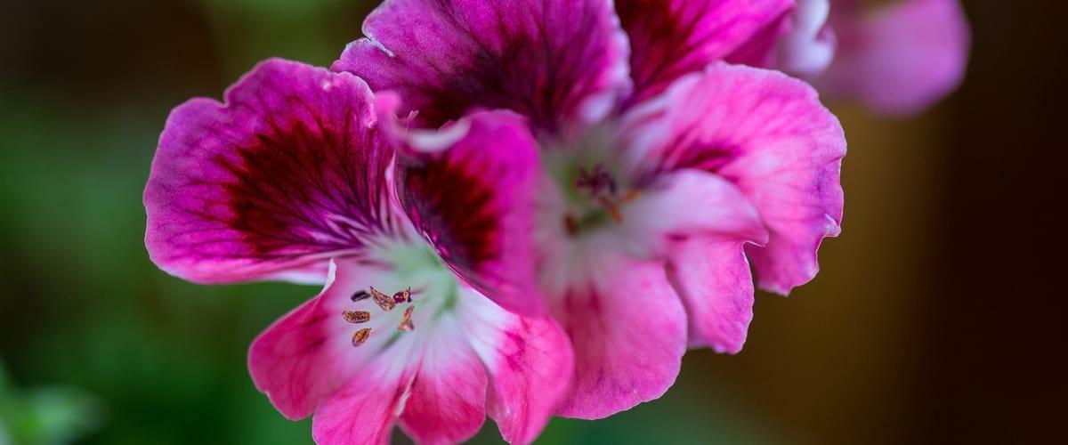 wsi-imageoptim-Floral-Arrangements