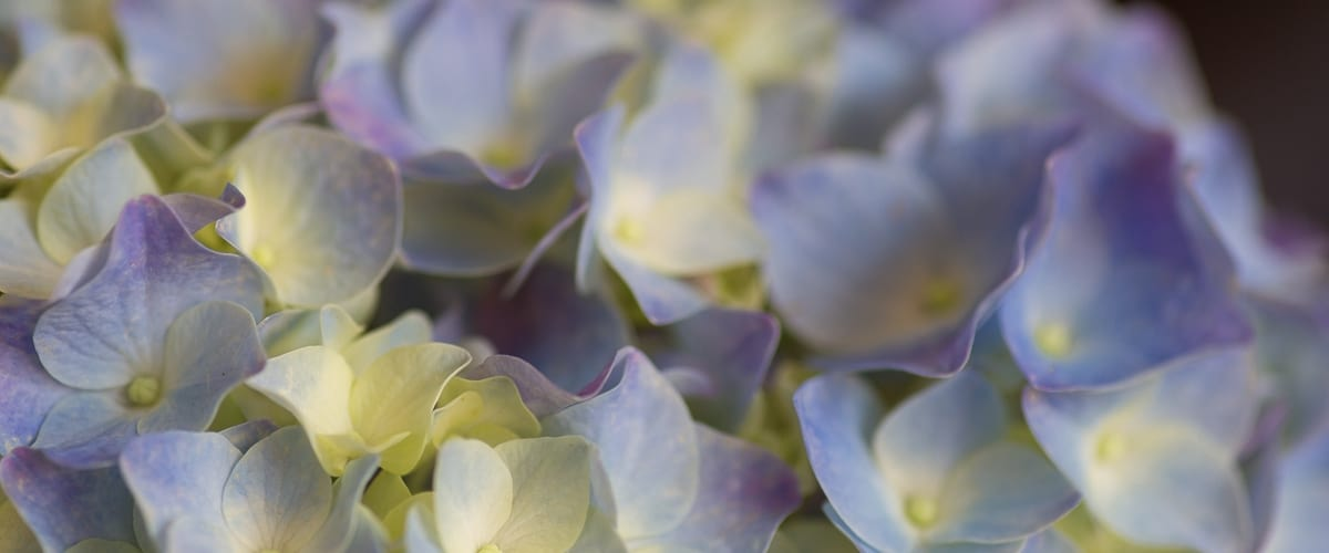 wsi-imageoptim-Flowers