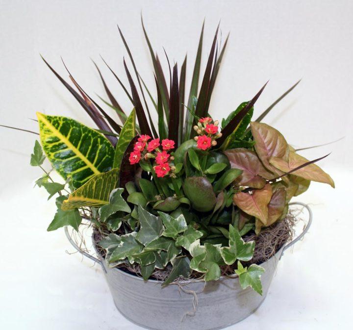 Boise Florist Plants