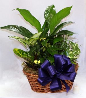 Boise Florist Dish Gifts