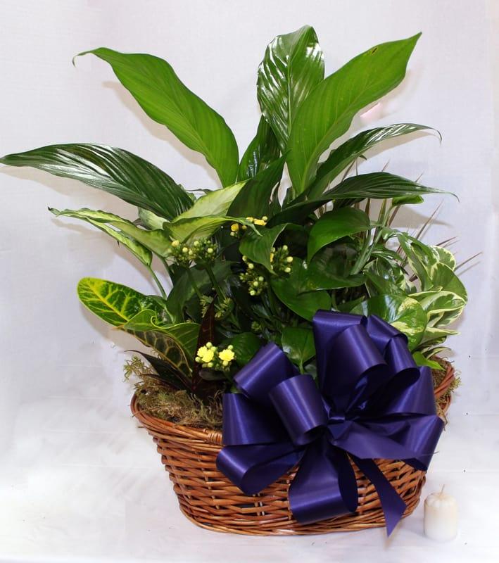 Boise Florist Dish Gifts