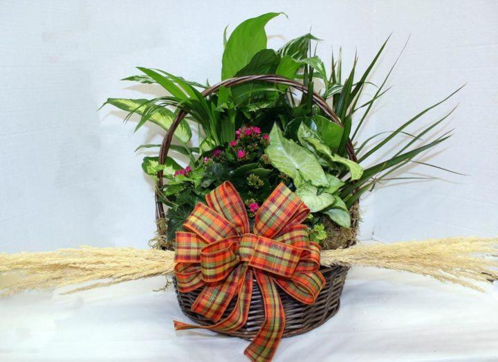 Boist Florist Plants